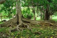 arbre-ancrage