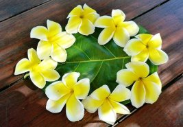 polynesia-1766922__340